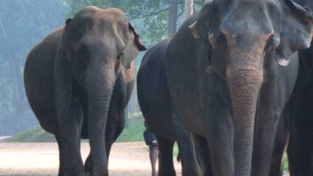 Sri Lanka Elephant Week