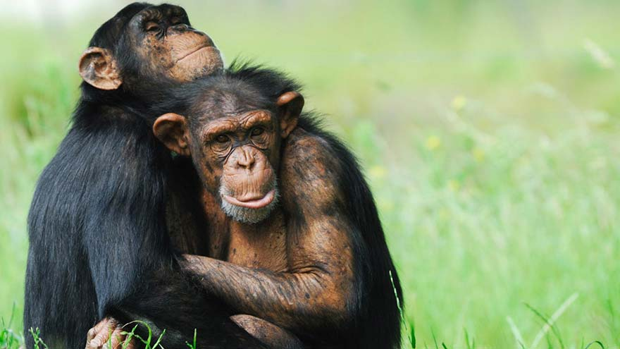 Chimp Sanctuary